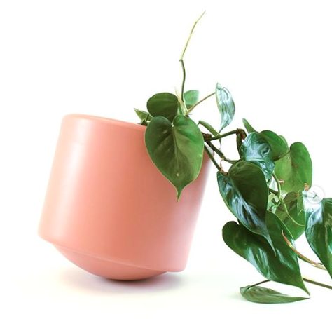 Skye Pot by Botanica Boutique