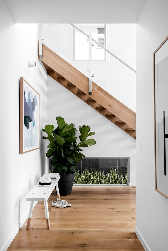 Fiddle Leaf Fig brightening an empty space underneath an open tread stair case. Kalka display home in Wooloowin photographyed by Cathy Schusler.