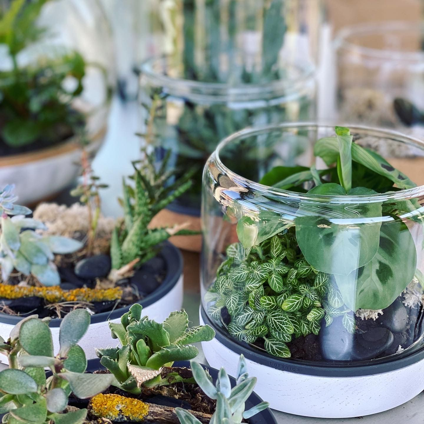 Sanctuaries, Terrariums and Planters in your home